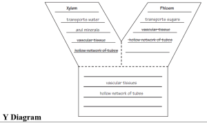 y diagram